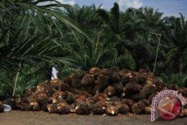 Disbun Kaltim pacu peningkatan produksi kelapa sawit