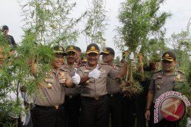 Kapolri Pimpin Pemusnahan Ladang Ganja di Aceh Besar