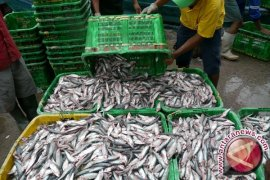 Produksi Perikanan Tangkap Bangka Tengah 23.606,50 Ton