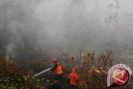 Restorasi Gambut Riau Butuh Dana Rp11 Triliun