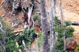Polres Kutai Timur Selidiki Temuan Bangkai Orangutan