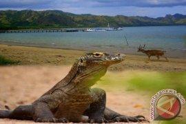 Delapan Kapal Pesiar Masuk Pulau Komodo