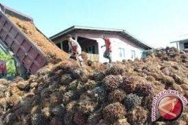 Harga CPO Jambi turun menjadi Rp5.873 per kilogram