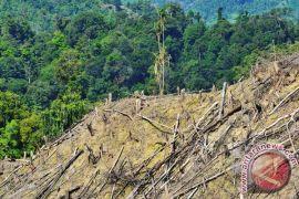 Sejumlah hutan lindung di Aceh terancam gundul