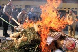 Kejari Aceh Barat musnahkan narkoba