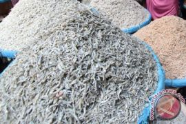Perajin ikan asin kembali keluhkan harga garam