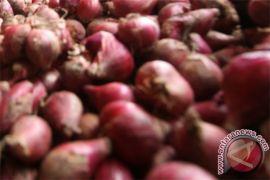 Ini tantangan utama produksi bawang merah berkualitas ekspor