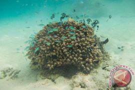 Pertamina bangun taman terumbu karang di Pariaman