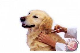 Ribuan Anjing di Gorontalo Utara Divaksin Rabies