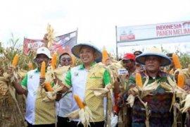 Ridho: Lampung Bumi Agribisnis dan Sentra Jagung Nasional