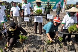 Realisasi Cetak Sawah Baru Kalbar 11.269 Hektare