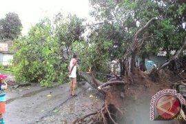 Angin Kencang Ancaman Bencana Tertinggi Kabupaten Bogor