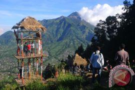 Pelaku usaha dari Skandinavia tanam pohon di Gunung Merapi