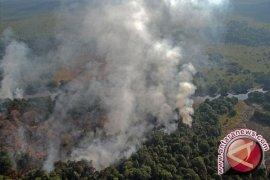 Hutan Taman Nasional Situbondo diduga dibakar