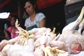 Kutai Timur Beri Label Halal Pedagang Ayam Potong