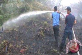 BPBD Singkil kesulitan padamkan api lahan gambut