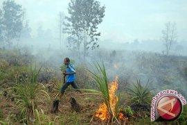 Memburu Pembakar Hutan dan Lahan