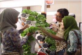 Komunitas Hidroponik Surabaya Ajak Kembangkan Kebun Tanpa Tanah