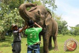 Melongok Rumah Sakit Gajah Way Kambas Lampung