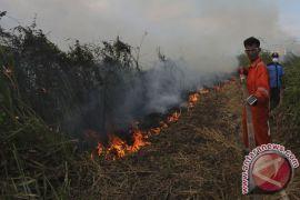 Riau tetapkan status siaga darurat Karhutla 2017