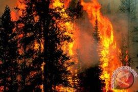 Polda Riau Tetapkan 85 Tersangka Pembakar Lahan