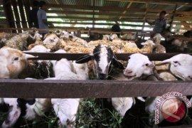 Penjualan hewan kurban Karawang masih sepi pembeli