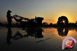 Nilai tukar petani Kaltim naik tipis