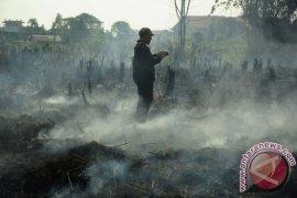 Fire ravages tens of hectares of peatland in West Kalimantan