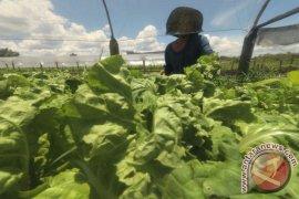 Petani Sayur Keluhkan Harga
