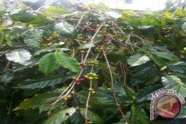 BI Dukung Pengembangan Agrowisata Di Bangli