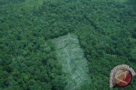 Kapuas Hulu-MCA Indonesia Kelola Hutan Gambut Berbasis Masyarakat