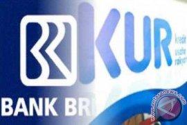 Realisasi KUR Bank Kalsel Rp9,3 Miliar