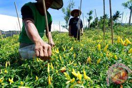 Petani-peternak bakal dapat kredit khusus di Gorontalo