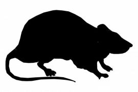 Helsinki hadapi fenomena tikus bersarang di mobil