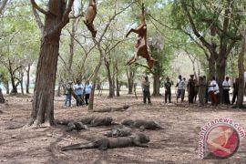 Sehari ada 650 kg sampah di Taman Nasional Komodo