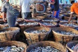Promosi Wisata, Pemkab Banyuwangi Gelar Tradisi Petik Laut Muncar