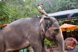 Menggaungkan Festival Way Kambas Lampung Timur