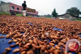 Petani Kakao Manokwari Terima Penghargaan Nasional