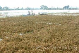 Kerugian HIPPA Tirto Tinoto Tuban akibat Banjir Rp2,7 Miliar