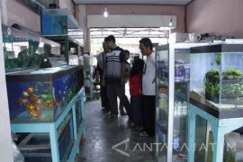 Kota Blitar Juara Laboratorium Kesehatan Ikan dan Lingkungan