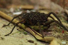 Sengatan tawon-lebah lebih berbahaya daripada gigitan laba-laba-ular