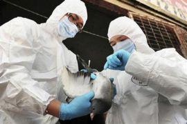 Filipina pantau terduga kasus flu burung pada manusia