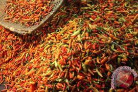 Kesejahteraan petani hortikultura Sulut naik
