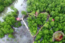 KPHL Biak tanam  mangrove 75 hektare