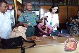 BKSDA Jambi ungkap 10 kasus perdagangan/perburuan satwa