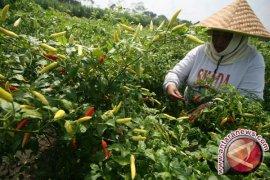 Nilai tukar petani Babel turun 1,64 persen