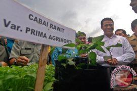 Setiap desa di Gorontalo wajib tanam cabai-tomat