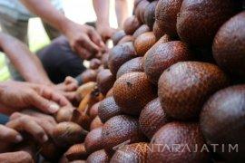 26 Kuliner Olahan Salak Bojonegoro Ikuti Festival