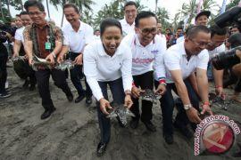 Garuda lepas 100 penyu di Pantai Senggigi