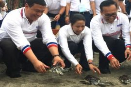 Menteri BUMN melepasliarkan penyu di Pantai Senggigi